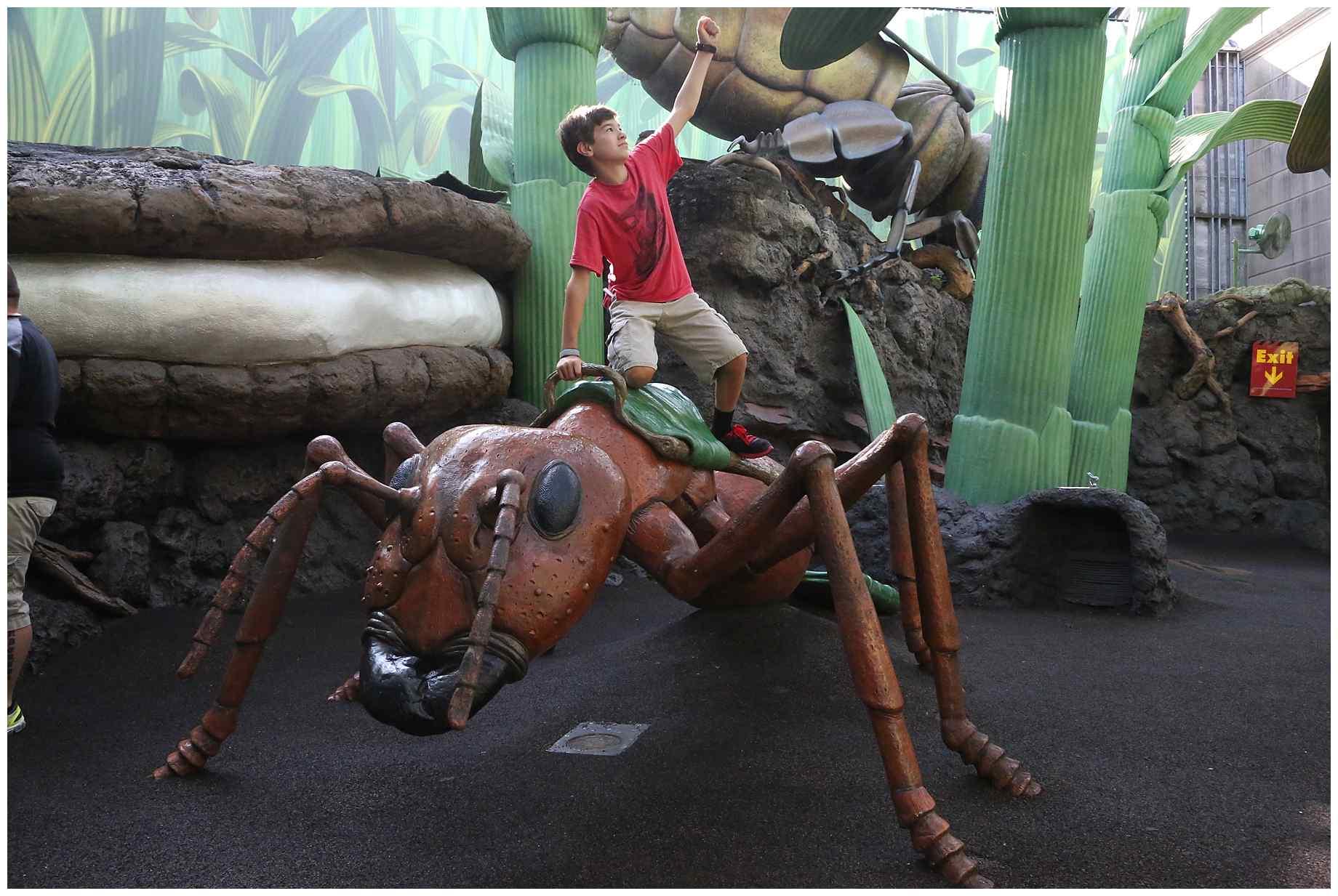 Disney-World-2015-006