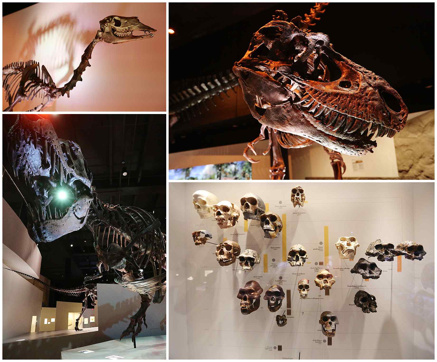 houston-museum-of-natural-science-wedding-photos-015