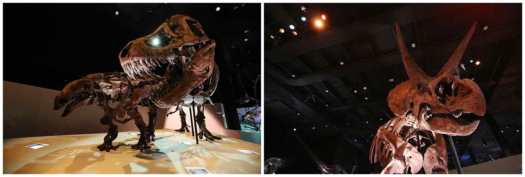 houston-museum-of-natural-science-wedding-photos-017